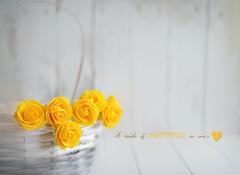 Une touche de douceur (Chocolatine photos) Tags: jaune yellow douceur blanc white stilllife photo photographesamateursdumonde pdc pastel roses nikon nature flickr flowers