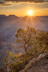 Morning Go Wild (Kirk Lougheed) Tags: arizona coloradoplateau grandcanyon grandcanyonnationalpark southrim templeofvishnu usa unitedstates vishnutemple wotansthrone yakipoint canyon landscape nationalpark outdoor park pine pinyon piñon rim summer sunrise tree