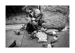 (Paphylo) Tags: story leicaq girl manhattan need street people pigeon newyork outdoor birds homeless reallife document city sidewalk