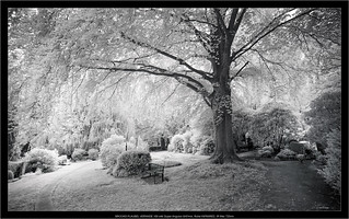 analog infrared: BROOKS PLAUBEL VERIWIDE 100 with Super-Angulon 8/47mm, Rollei INFRARED film, IR filter 720nm