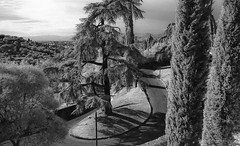 scn335- (gi@nnino) Tags: analogphotography analogica analogicait film firenze filmisnotdead fe2 florence bianconero blacknwhite blackandwhite infrarosso ir contrast develop