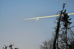 planes, moon, nature 03 (planes, moon, nature) Tags: bird tree baum branch camera coolpix cool claw notes away depth detail far fernaufnahme fun gewächs garden heaven high himmel icreasing kamera sky luckyshot leaf natur nature night nikon outdoor odd plant p900 pflanze space spotting technics up vogel wings winter eye zoom branches amsel beak flying fly flowers forest animal moon plane mond flugzeug timing wow air