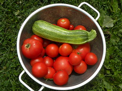 Harvest - Late July 2108 (MadKnits) Tags: garden green summer july plant plants growing tomatoes zucchini