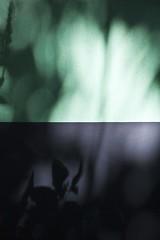 Morphogénèse (Gerard Hermand) Tags: 1809025475 pantin hallepapin gerardhermand france paris eos5dmarkii canon abstract abstraction abstrait arbre mur ombre shadow tree wall
