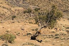 2018-4616 (storvandre) Tags: morocco marocco africa trip storvandre telouet city ruins historic history casbah ksar ounila kasbah tichka pass valley landscape