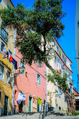 (Liane FKL) Tags: lisboa lisbonne portugal colors couleurs fasad façades city ville street rue urbain urban rose pink yellow jaune arbre tree stairs escaliers nature