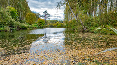 life is made up of little things (Dmitry Karyshev) Tags: karyshev 5dmiv novosibirsk nature tree water forest river outdoors landscape stream reflection scenics lake greencolor summer autumn beautyinnature tranquilscene flowingwater woodland leaf pond everypixel