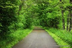 20 May 2018:  Green day (RobinMSP) Tags: may2018c dailywalk spring nature trails path richlandbotrail mansfieldohio ohio
