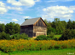 Fleurs d'automne (Jean S..) Tags: white blue green clouds sky trees barn