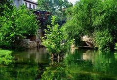 Reflections in Green (Jocelyn777) Tags: water reflections waterreflections foliage leaves trees green buildings architecture steps neretvariver bosniaandherzegovina mostar balkans travel