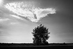 5011 (pkomo) Tags: pkomo kotzabasis smooth tree
