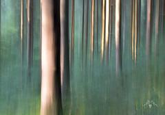 Rise & Shine (Marjolijn Kraaij) Tags: marjolijnkraaij forest ardennes icm green woods trees lines sunset light treetrunks