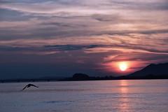 Sunset over river Bramhaputra (Satyajit Chatterjee) Tags: sunset eventide daybreak red yellow bird river bramhaputra guwahati assam evening hill