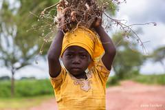 Collecting Firewood (Irene Becker) Tags: africa imagesofnigeria kaduna kadunastate nigeria nigerianimages nigerianphotos northnigeria westafrica firewood northernnigeria portrait hausa hausagirl turunku