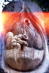 squirrel with light leak (pho-Tony) Tags: toycameras classiccameradiytlr haynes manual classic camera haynesmanualclassiccamera haynesmanual kit plastic toy novelty 35mm receskytlrdiycamera recesky tlr diy gakkenflex ishootfilm agfavista agfa vista iso 200 poundland tetenal c41