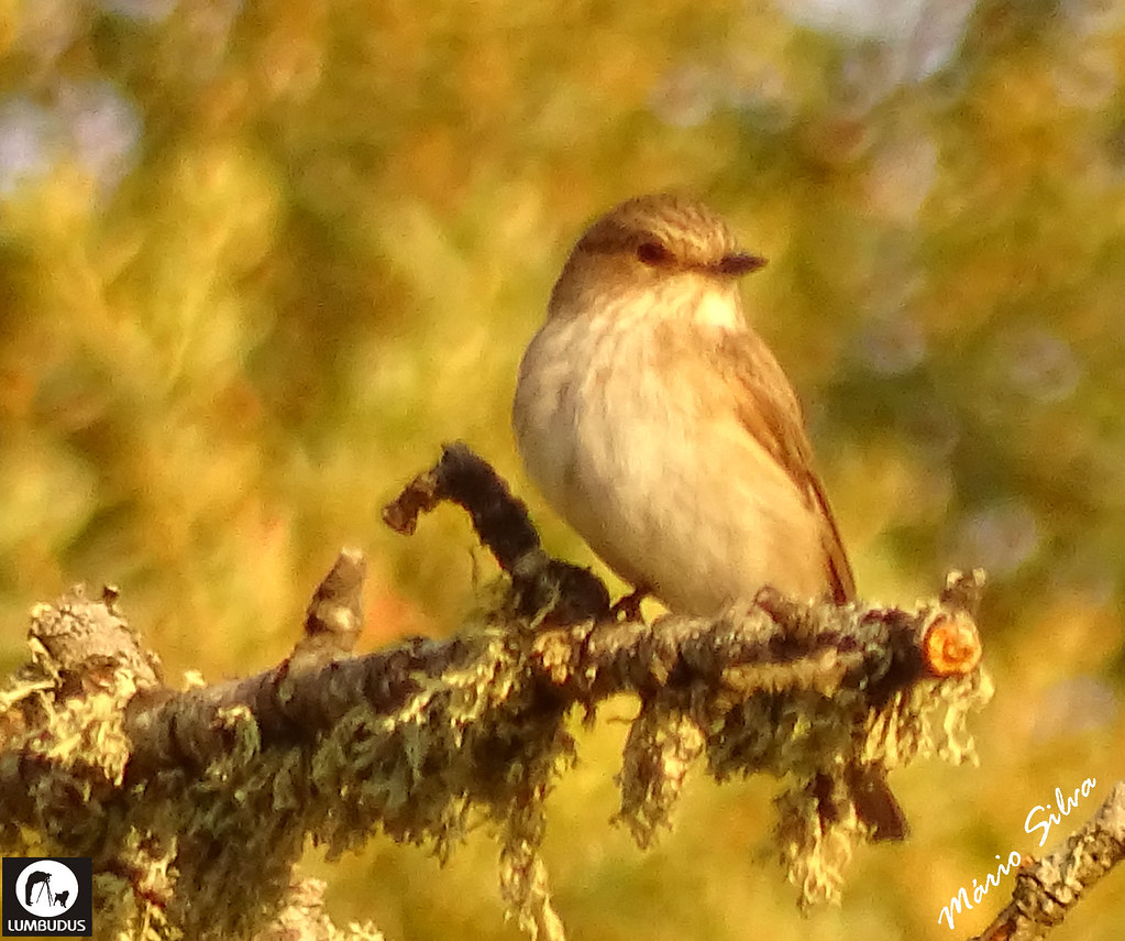 Águas Frias (Chaves) - ... ave empoleirada observando ... a ver se consegue almoço ...