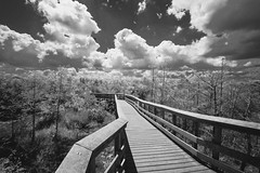 Boardwalk (dalepedls) Tags: boardwalk trees clouds sky landscape infraredcamera infraredphotography infrared blackandwhite