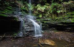St Michael's Falls    North Lawson (David Marriott - Sydney) Tags: bluemountains newsouthwales australia au blue moutnains nsw lawson north st saint michael falls waterfall rain wet rock fern