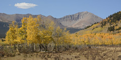 Guyot Autumn (Aaron Spong Fine Art) Tags: autumn sawatch front range guyot mount mountain mountains colorado fall colors 2018 co tenmile mosquito