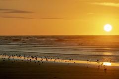 Sunrise Stone Harbor. (rumerbob) Tags: sunrise sunrisestoneharbornj stone harborstone harborsceneryscenicseashoreseascapebeachoceancanon 7d mark iicanon 100400 mm lens