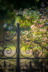 Beyond the Gate (Lindsey1611) Tags: gate iron curly curves backlit sunlight afternoon autumn garden helminghamhall suffolk