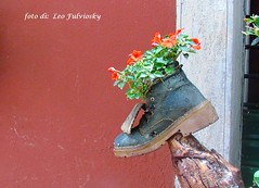 Recycle everything .. Riciclare tutto. (Leo Fulviosky) Tags: flowers shoe perfume vaso forrest gump
