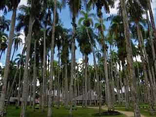 Palmtree Garden, Paramaribo