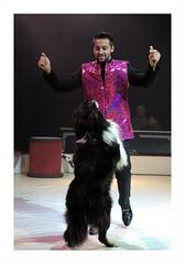 """Le Cirque Français"" (The Blue Water Lily's Company) Tags: fdrouet chien maître dog cirque circus nikon d90"