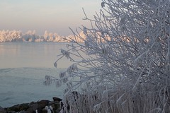 beautiful ripe after a foggy night (ronaldort1311) Tags: ripe winter lake westeinder