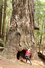 Pfeiffer Big Sur State Park (alexhouston) Tags: kids quinn big sur trip 2018 labor day explorations vacation pfeiffer state park