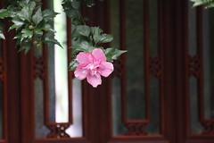 杭州西湖-萬松書院 (沐均青) Tags: china landscape scenery travel flower pink tree green 杭州 summer raining nature park plants buildings