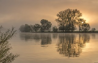 *golden morning at the river*