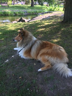 A Dog Named Finn