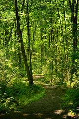 Summer Greens (flashfix) Tags: august302018 2018inphotos flashfix flashfixphotography ottawa ontario canada nikond7100 55mm300mm landscape trees green nature mothernature trail merbleue