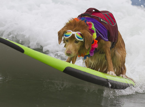 Colorful Surf Dog