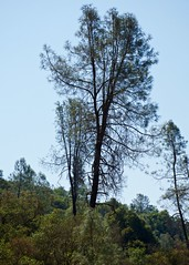 DSC_1706-a18 (stumbleon) Tags: nikondslr nikond7200 amadorcountycalifornia landscape trees california rural countryroads grassland rollinghills