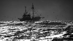 Fishing 2 (Drummerdelight) Tags: fishingboat seagulls seascape