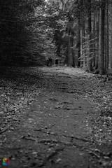 aufstieg (v a n d e r l a a n . fotografeert) Tags: 201809072479 duitsland germany h7wolfhagenimlandderriesen ippinghausen leckringhausen bos forest spaziergang steiging vakantie2018 vanderlaanfotografeert wald wandeling woud aufstieg monochroom monochrome