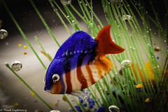 Murano Glass Fish (Thad Zajdowicz) Tags: zajdowicz pasadena california macro closeup primelens 100mm canon eos 5dmarkiii 5d3 dslr digital availablelight lightroom indoor inside color light shadow colour fish glass murano aquarium art