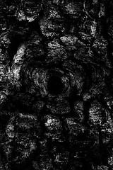 (willy vecchiato) Tags: blackandwhite biancoenero monochrome monocramatico mono dark noir nature wild natura abstract abstraction oscura os obscure fine art artistic grafica grafismo paint 2018 fuji x100s