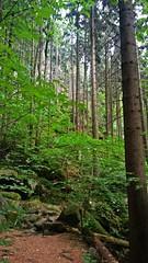 Góry Stołowe, Poland (trampinthevoid) Tags: mountains mountain poland polska sudety góry june stołowe