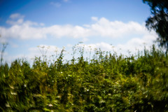 Grassy verge (judy dean) Tags: judydean 2018 lensbaby grass wildflowers clouds weeds countryside