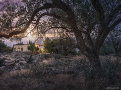 Alcora at the sunset, Canjayar, Almería, Spain (dleiva) Tags: field sky landscape nature tree plant grass spain mountain day photography andalusia outdoors horizontal scenics tranquility color image no people almeria sierra cloud dleiva domingo leiva carob rock object