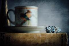 Little Blue Shell #3 (Janet_Broughton) Tags: lensbaby velvet85 textures shell