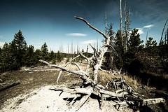Root Ball (CD_MT) Tags: 1424mm cdmt d4 nationalpark nikkor nikon nikond4 yellowstone yellowstonenationalpark dark stump tree