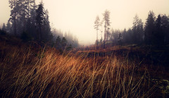 Forest Meadow (Topolino70) Tags: nokiapureview808 mobile meadow forest autumn fog mist bright tree weed