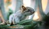 Esquilo Curioso (ruifo) Tags: nikon d700 sigma 105mm f28 dg hsm os macro 11 animal wild life curious baby squirrel by bebé ardilla curioso bebê esquilo mexico city cdmx méxico ciudad tree arbol árbol arvore árvore nature naturaleza natureza