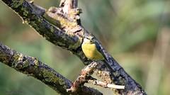 J78A0552 (M0JRA) Tags: birds flight flying wildlife rats walks gardens parks fields trees lakes ponds ducks swans rspb