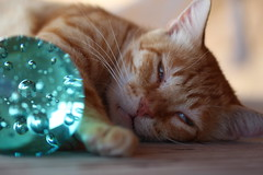 IMG_0052 Rubio, Mallorca (Fernando Sa Rapita) Tags: rubio cat gato mascota pet canon eos1300d canoneos
