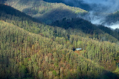 Cottage in Great Smoky Mountains (allan-r) Tags: cottage mountains great smoky fog greenery trees forest house fujifilm xt2 xf55200mm